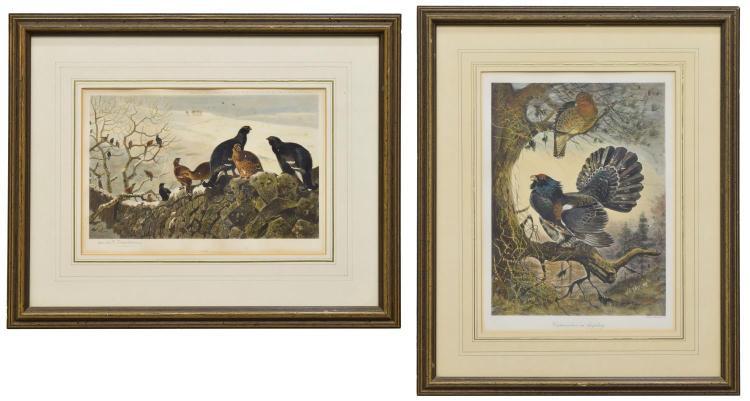 (2) HAND-COLORED BIRD PRINTS, THORBURN & MILLAIS