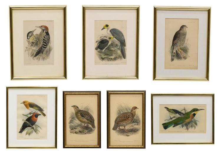 (7) J.G. KEULEMANS IBIS JOURNAL BIRD LITHOGRAPHS