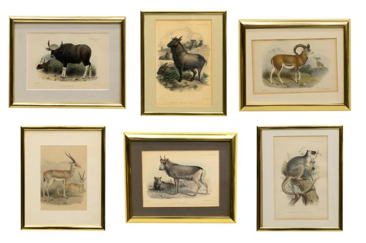 (6) ZOOLOGICAL SOCIETY HAND-COLORED LITHOGRAPHS