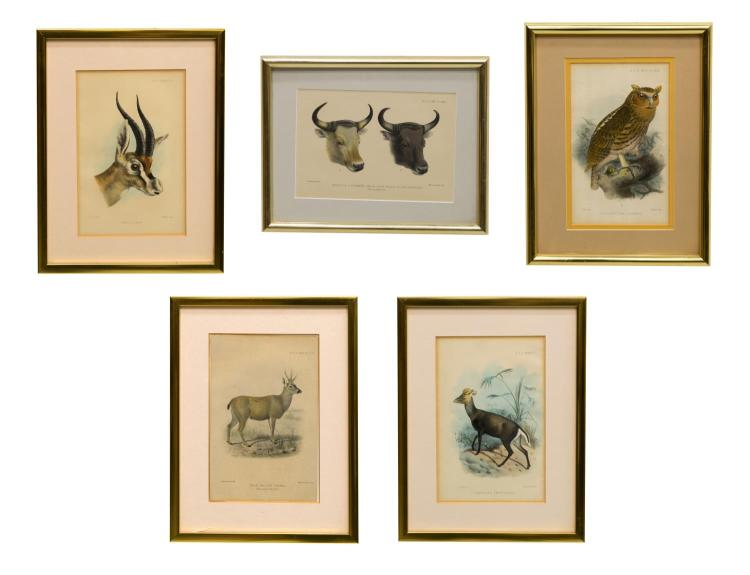 (5) ZOOLOGICAL SOCIETY HAND-COLORED LITHOGRAPHS