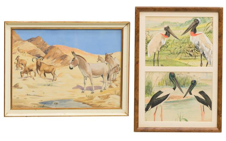 (2) FRAMED NATURALIST WATERCOLORS, WILLIAM BURGER