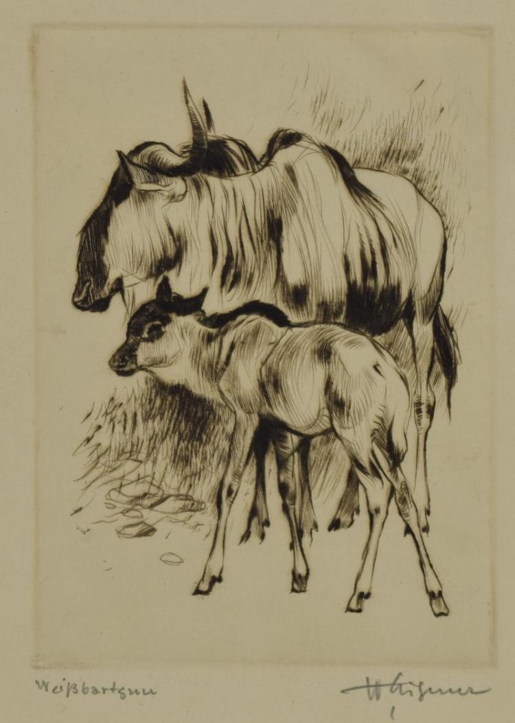 FRAMED EIGENER (B. 1904) 'WEISSBART GNU' ETCHING