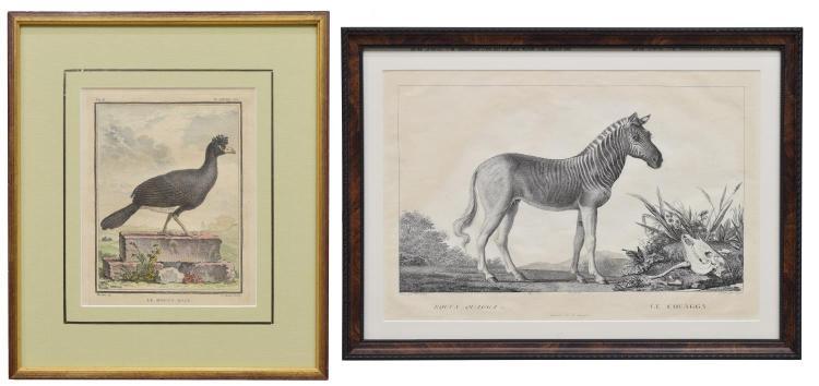 (2) FRAMED NATURAL HISTORY LITHOGRAPHS, QUAGGA