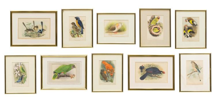 (10) 'AVICULTURAL MAGAZINE' HAND-COLORED PRINTS