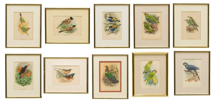 (10) FRAMED AVICULTURAL MAGAZINE BIRD LITHOGRAPHS