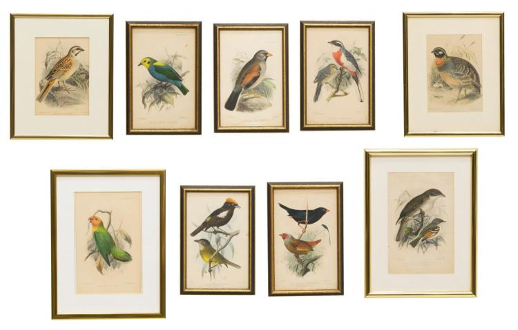 (9) FRAMED IBIS JOURNAL HAND-COLORED LITHOGRAPHS