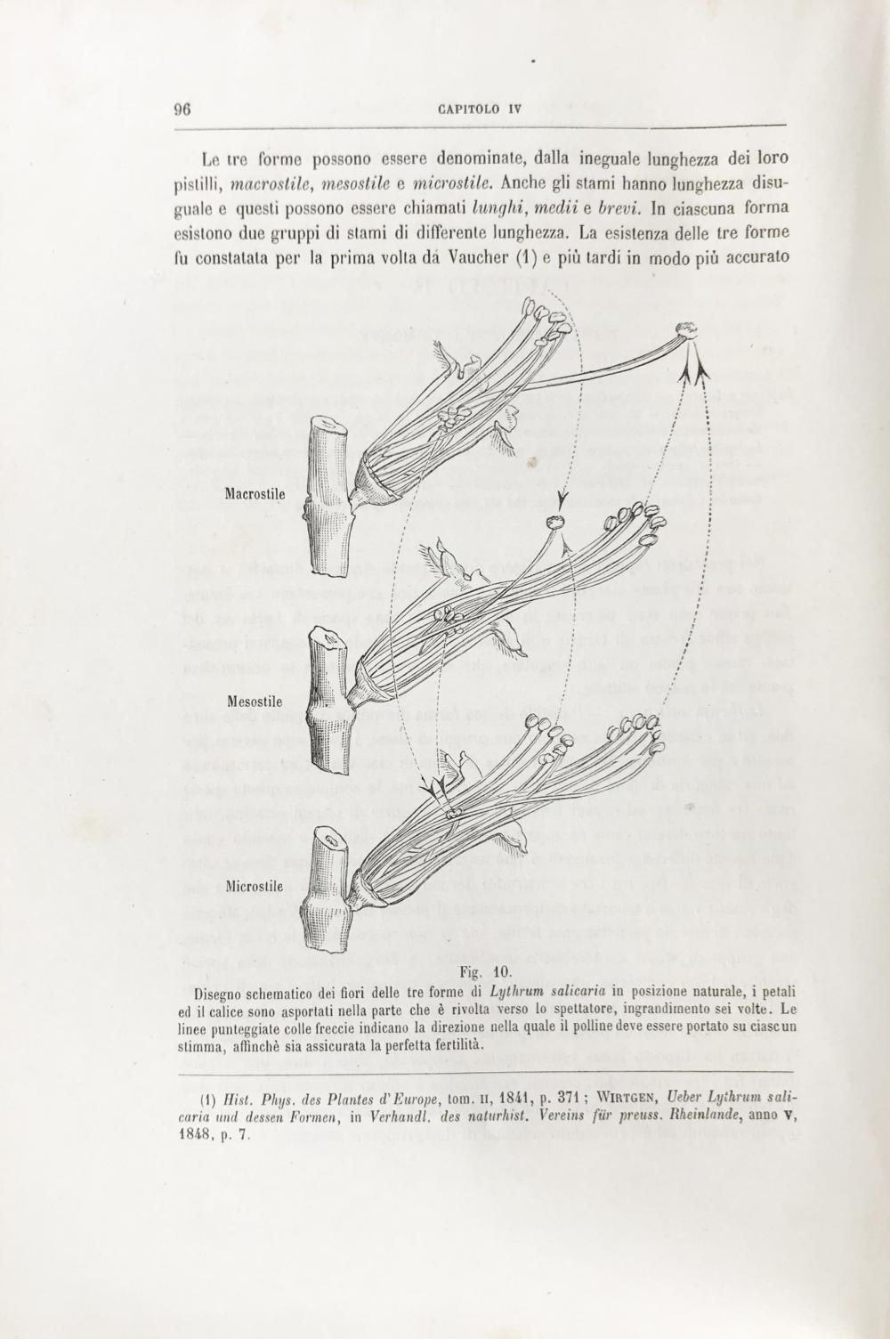 Parte Dei Fiori.Darwin Charles Le Diverse Forme Dei Fiori