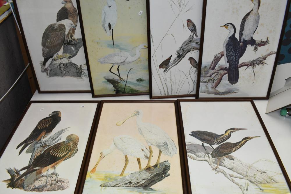 Set of seven bird prints, 50 x 34cm