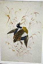 W. Freeman watercolour in the style of Cayley duck