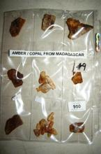 Collection of amber copal specimens