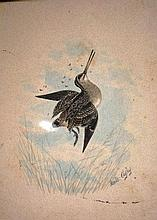 Neville Cayley, watercolour 'shot snipe' signed