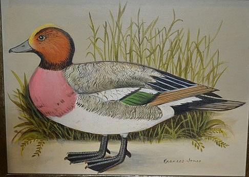 Frances Jones (1923-99, Aust.), 'Widgeon Duck' oil on board, signed Frances Jones, title verso,  14.5 x 19.5cm