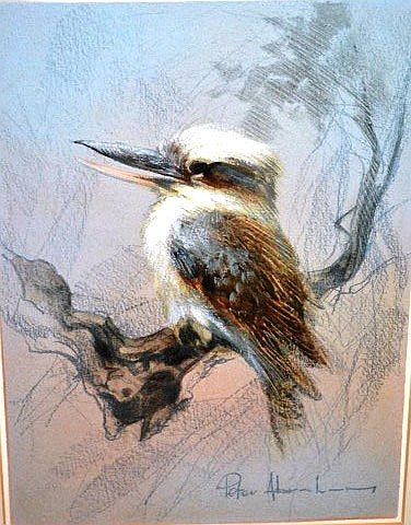 Peter Abraham, (Australia), 'Kookaburra', mixedmedia pastel and oil on card, signed, 28.5 x  x  21cm