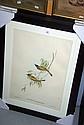 3 Framed Gould bird prints