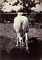 Famin, Constant: Horse from behind