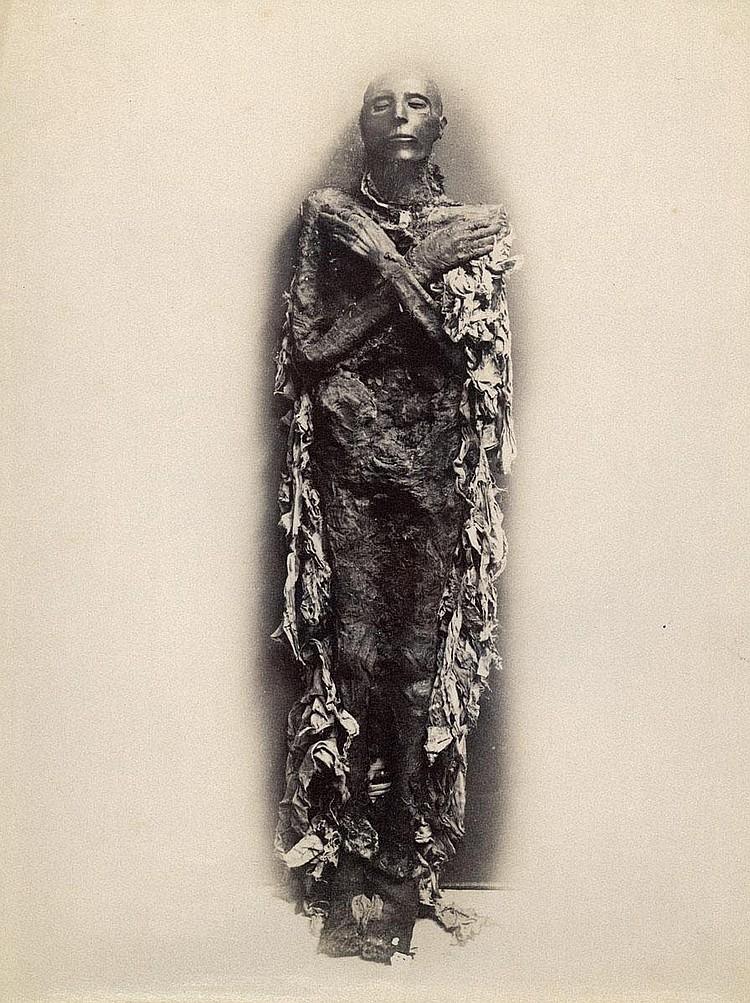 Brugsch, Émile: Mummy of Seti I