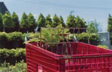 Eggleston, William: Memphis, Tennessee (red cart)