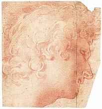 Florentinisch: um 1600. Kopf eines Jünglings mit lockigem Haar