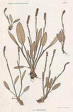 Ettingshausen, Constantin v. and A. Pokorny: Plant studies