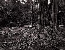 Ceylon: Landscapes of Ceylon