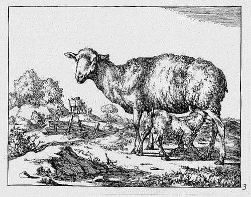 Bye, Marcus de: Die Folge der Schafe