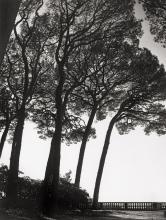 Tabard, Maurice: Trees