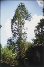 Eggleston, William: Tree