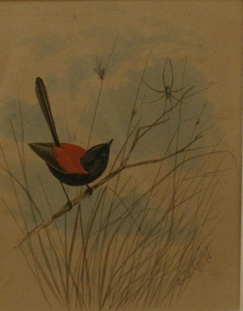 Neville Henry Pennington Cayley (1853-1903) Red-Backed Fairy Wren gouache