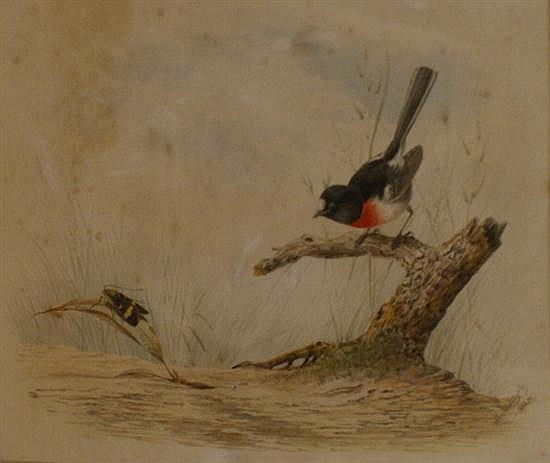 Neville Henry Pennington Cayley (1853-1903) Scarlet Robin 1892 gouache