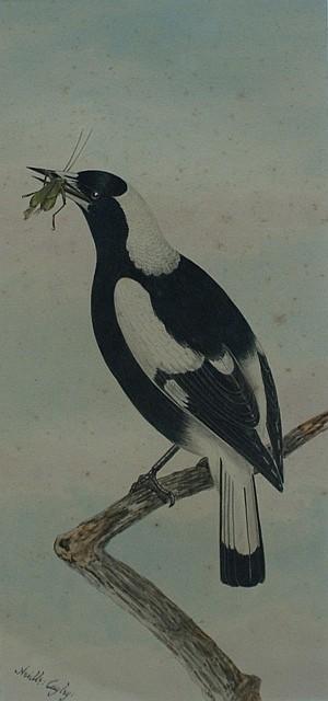 Neville Henry Pennington Cayley (1853-1903) Magpie watercolour
