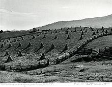 "MARION POST WOLCOTT, ""Corn shocks & split rail fence, near Marion, W. Va. 1939."""