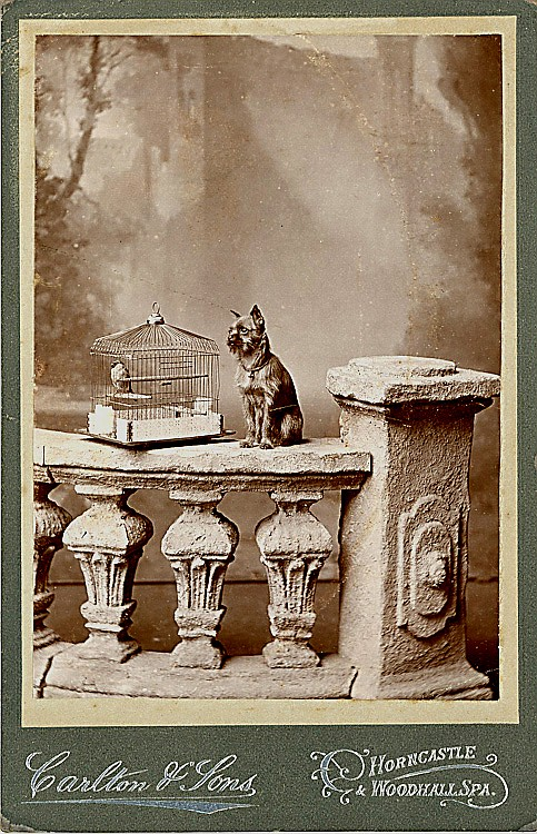 A dog and a bird. 2 cabinet cards.