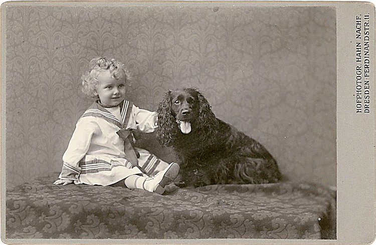 Large dogs. 5 cabinet cards.
