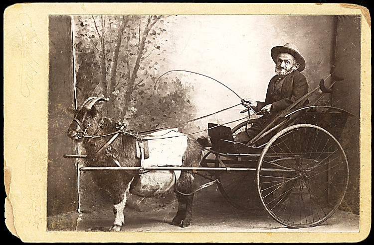 Ezra Sain, in a cart driven by a pigmy goat.