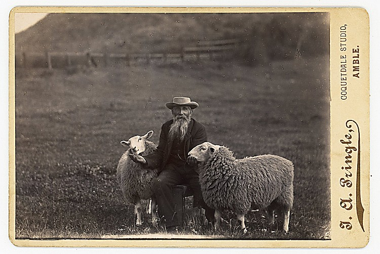 A bearded shepherd with sheep.