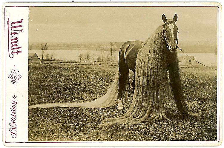 Linus the horse with a long mane.