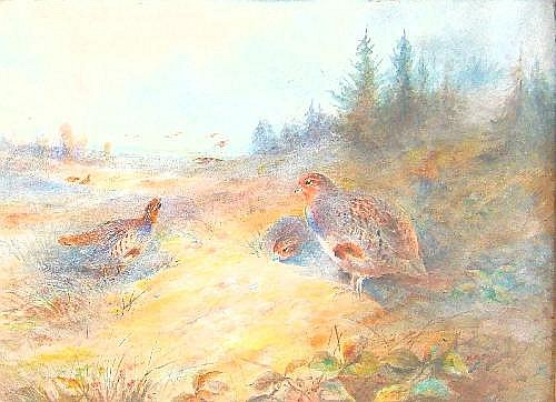 James Stinton (1870-1961). A covey of partridges