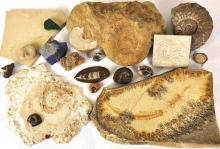 Collection FOSSILIEN