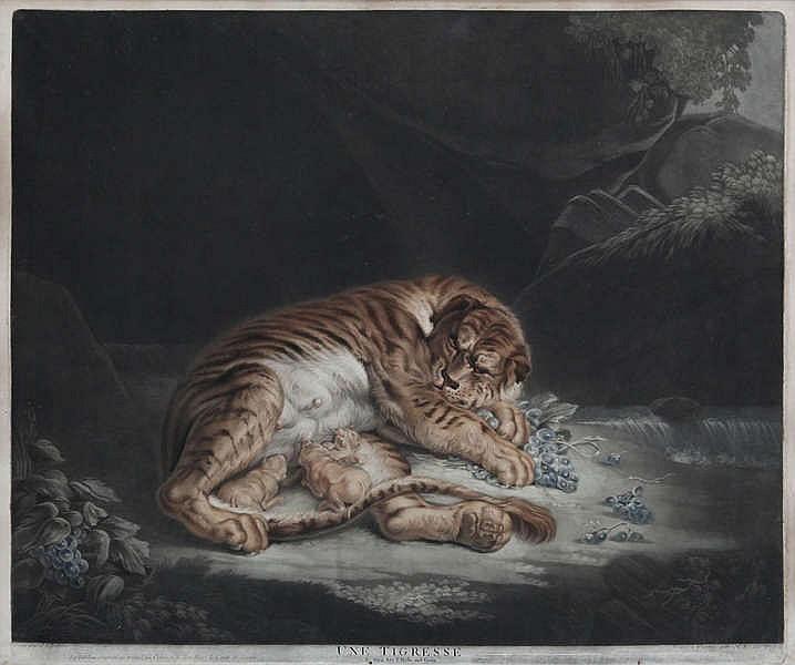 NICOLAS RHEIN (1767-1819), naar Rubens        'Une tigresse'. Mezzotint. Getekend en