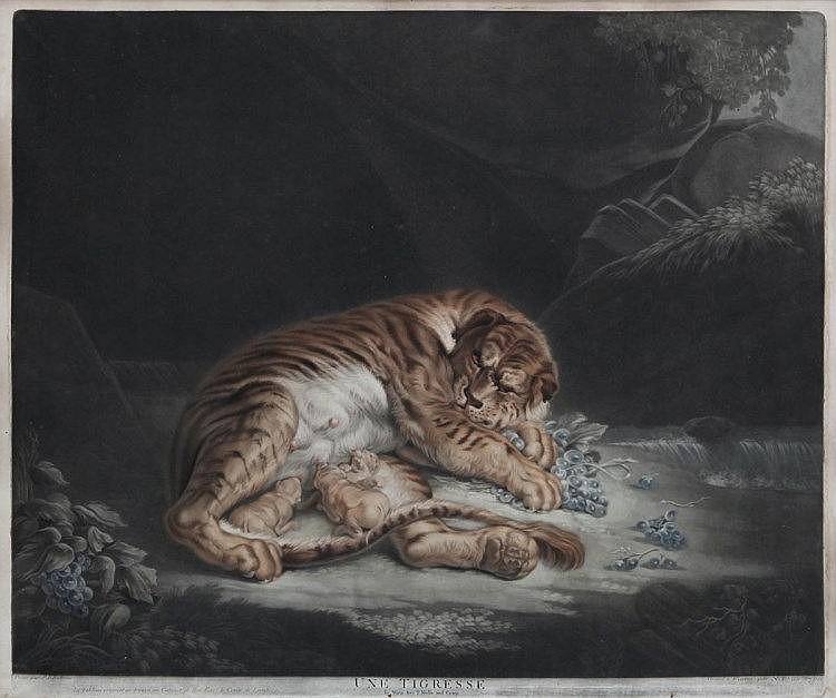 NICOLAS RHEIN (1767-1819), after Rubens'Une tigresse'. Mezzotint. Framed. 485 x 565 mm