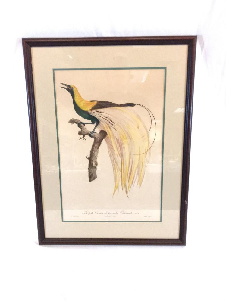 French Bird Lthograph
