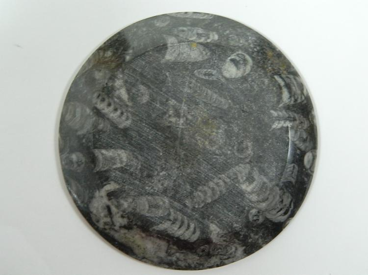 Lot 58: Fossil Plate from Atlas Mountains in Morocco
