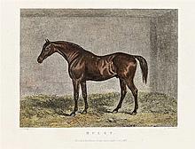 James Barenger (1780-c.1831) - Muley