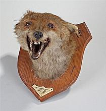 Fox mask or head on a shield shaped wooden mount with label Mr Spooner's Ho