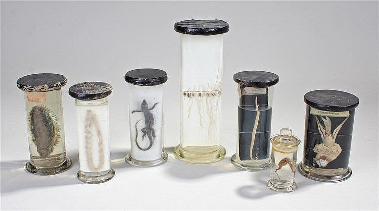 Seven early 20th Century preserved specimens, to include a Round Worm, a Li