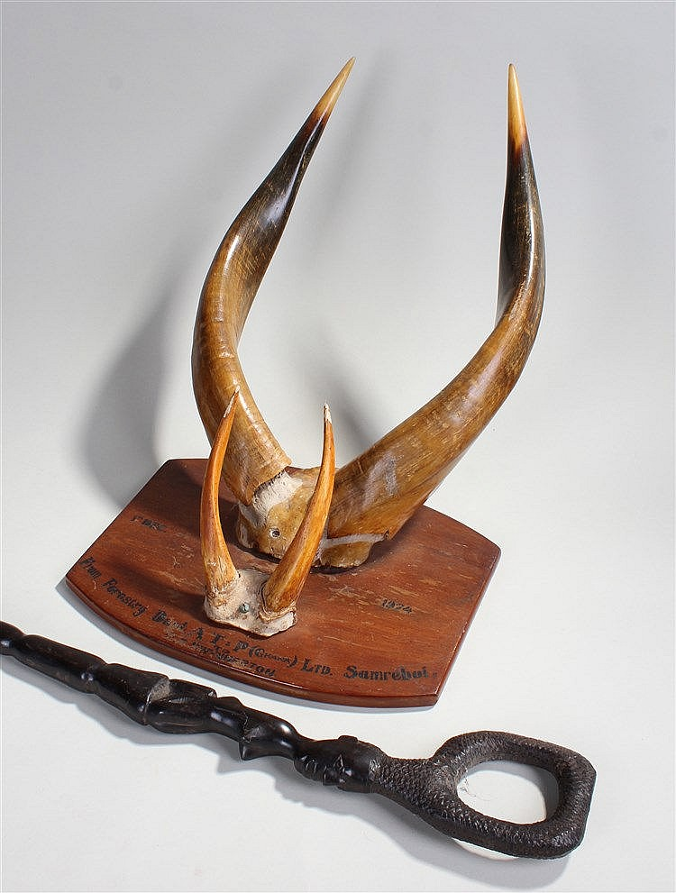 Two pairs of mounted horns, the plaque dated 1974, From Forestry Dent A.T.
