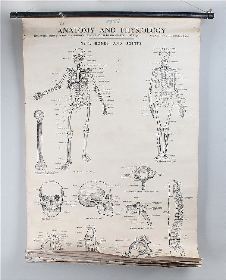 Collection of First Aid posters, to include descriptions of skeletons, Tour