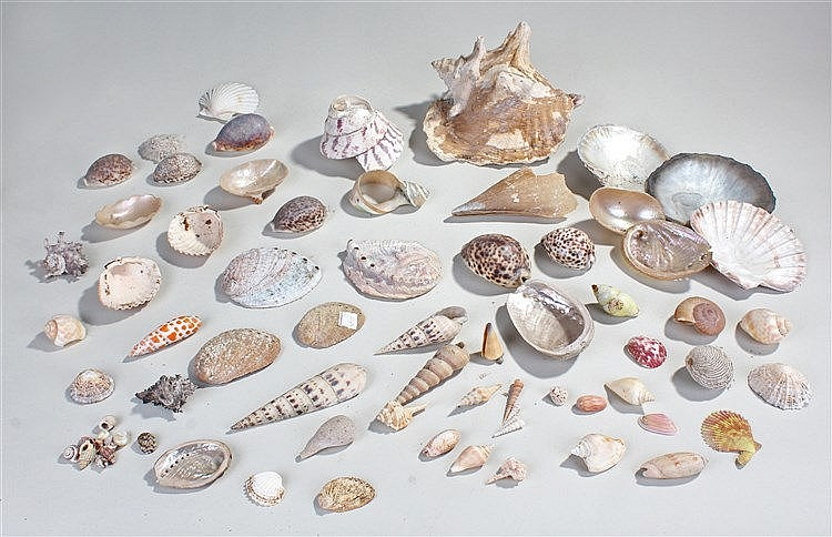 Collection of sea shells, various different shape and sized shells, (qty)