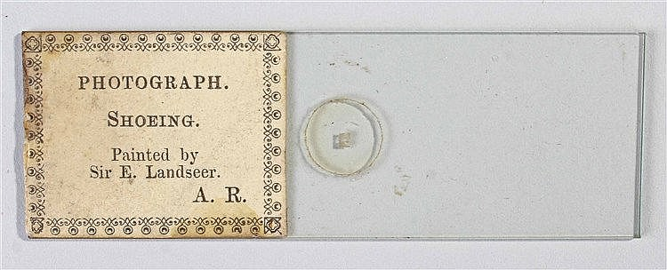 Microscope slide microdot photograph, Shoeing by Landseer, label A.R.