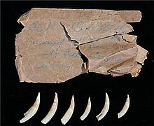 Six early 20th century crocodile teeth, with remains of envelope saying tha